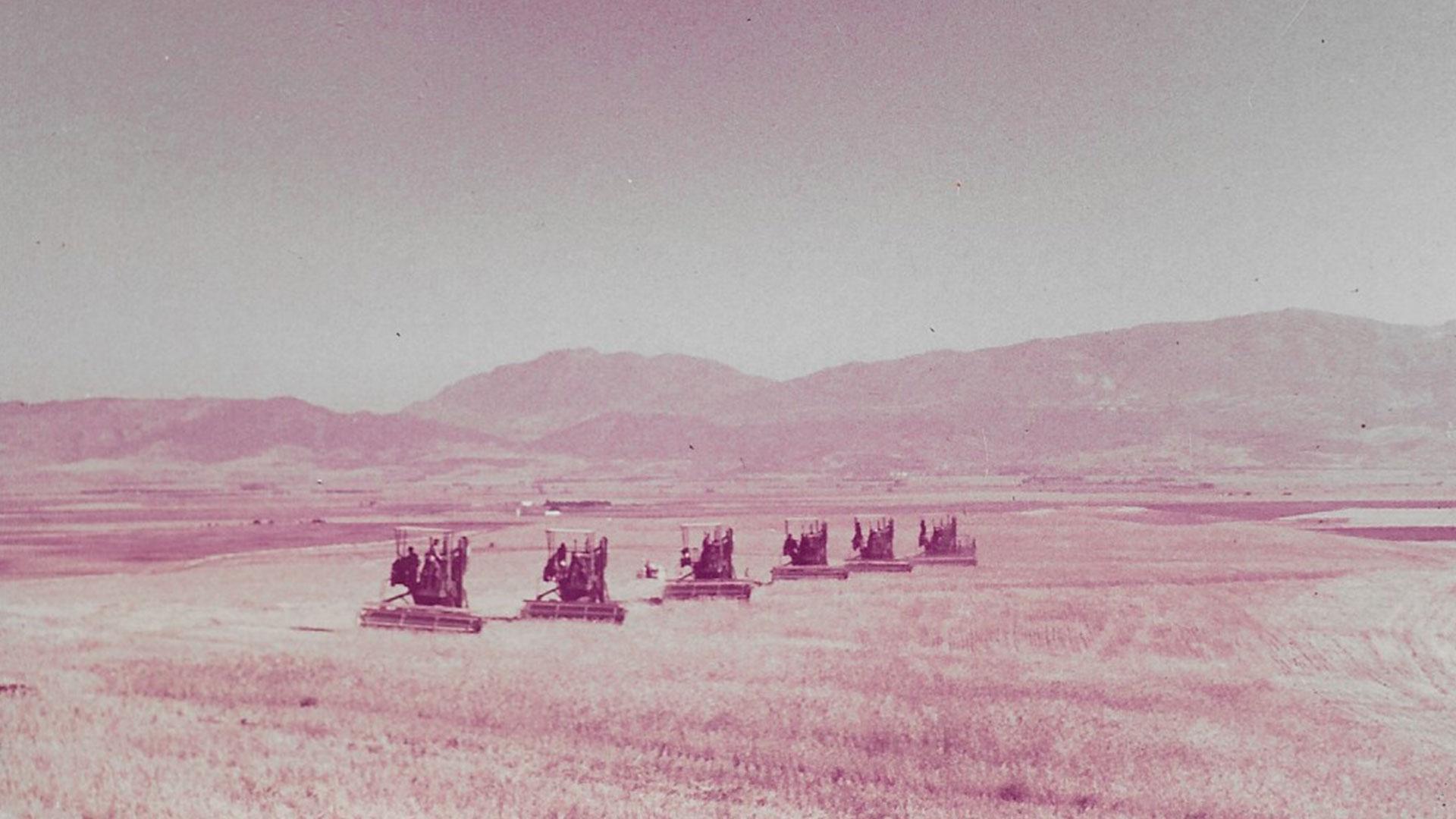 Batna-agriculture-2