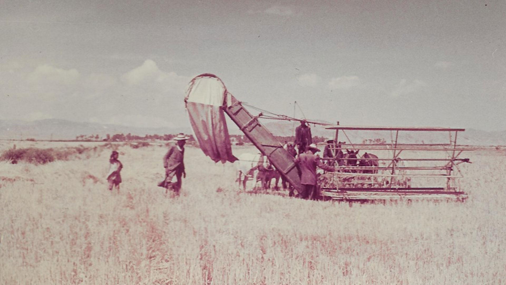 Batna-agriculture