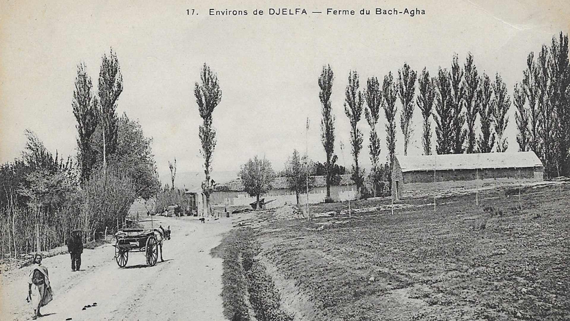 Djelfa-Ferme-Bach-Agha