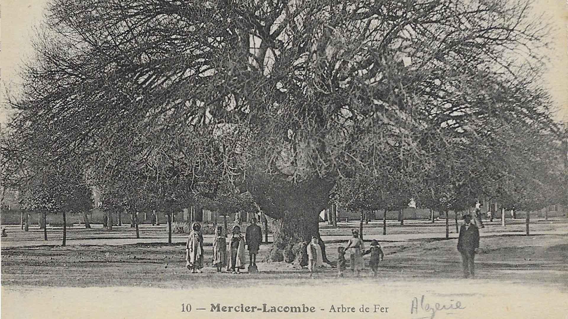 Mercier-Lacombe-Arbre-de-Fer