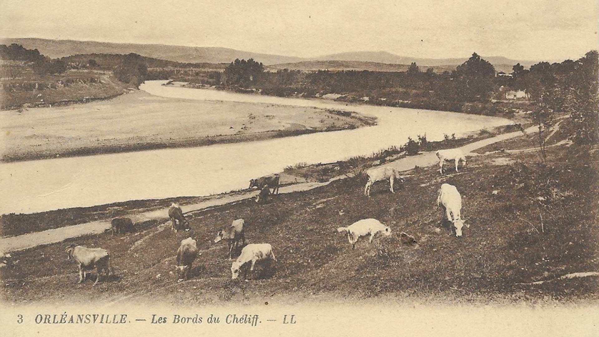 Orleansville-Cheliff