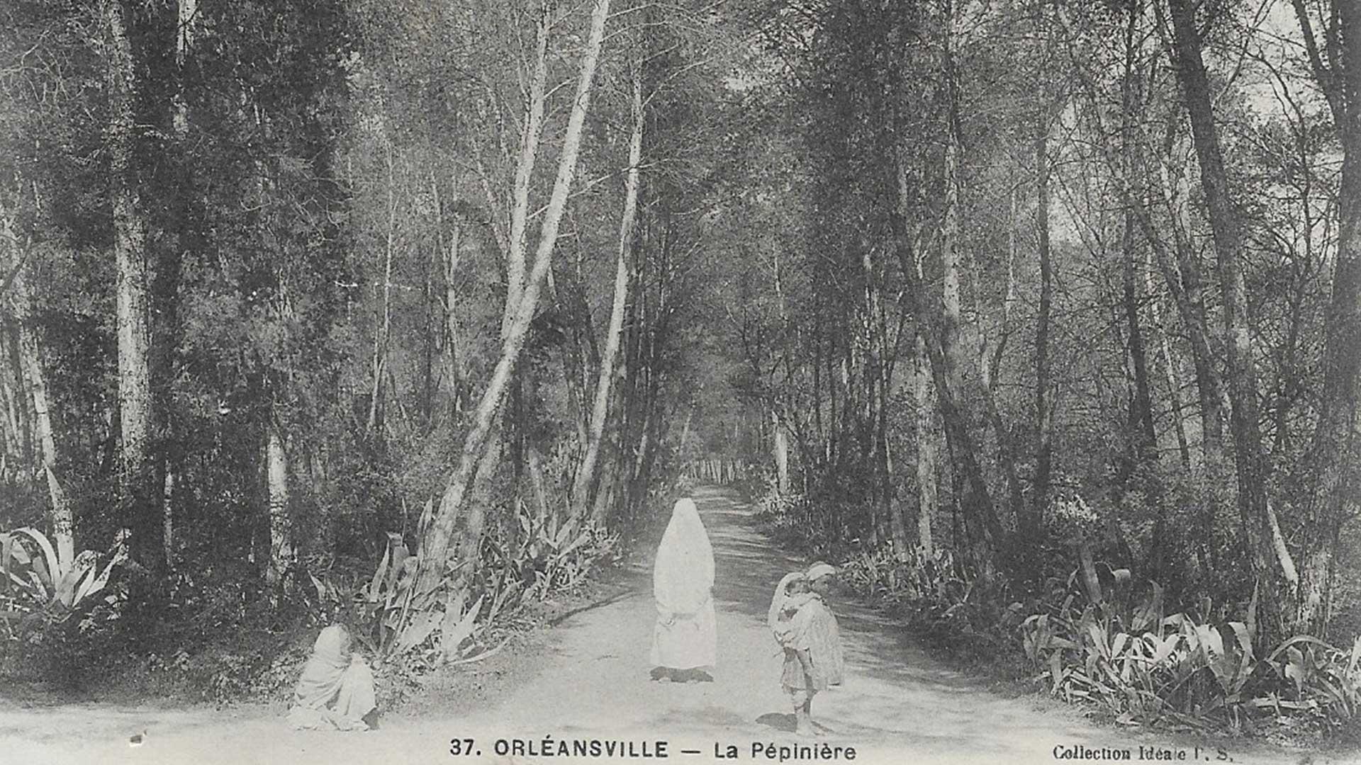Orleansville-pepiniere